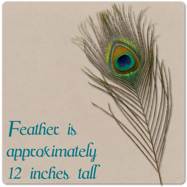 CU Single - Peacock Feather {Personal or CU} [] - $2.00 : Something ...